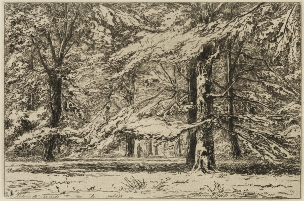 Carel Nicolaas Storm van s' Gravesande, In the Park of the Chateau of Groeneveld, c. 1877, Etching printed in black ink on laid paper. Detroit Institute of Arts.
