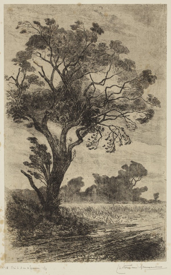 Carel Nicolaas Storm van s' Gravesande, Pear Tree near Moulins-Warnant, c. 1872, Etching printed in black ink on chine colle. Detroit Institute of Arts.